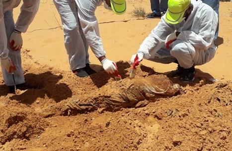 MEE: مشاهد بشعة ومزيد من المقابر الجماعية في ترهونة