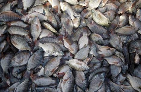 الصومال وإثيوبيا يوقعان اتفاقية لتبادل السمك والقات