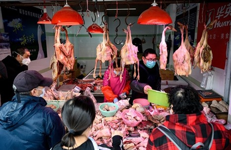 دراسة: سوق ووهان باع 47 ألف حيوان بري قبل تفشي كورونا