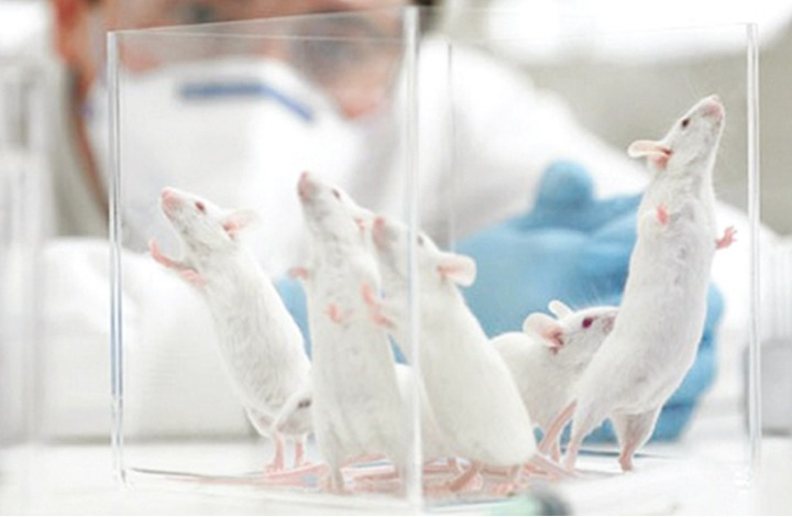 دراسة: تجارب أجريت على الفئران أصبحت محل شك.. والسبب؟