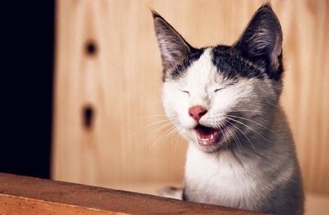 فرار قطة متهمة بتهريب المخدرات من سجنها بسريلانكا