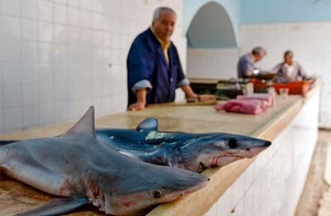 الغارديان: هكذا دخل سمك القرش على قائمة طعام التونسيين