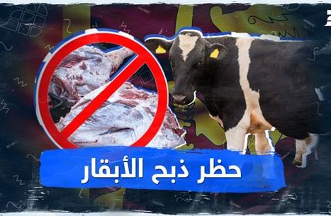 حظر ذبح الأبقار