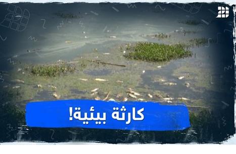 كارثة بيئية!