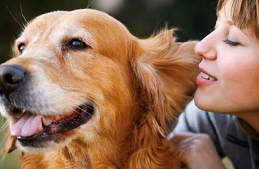 كلاب أليفة للكشف عن مرض السكري