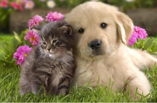 ربع الكلاب والهررة في أمريكا بدينة