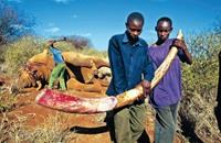 تنزانيا تطالب بفرض حظّر دولي على تجارة العاج