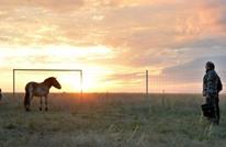 بوتين يعتني بخيول برية نادرة (فيديو وصور)