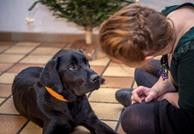 دراسة: الكلاب تستخدم الإيماء للتواصل مع البشر