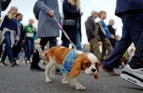 دراسة: العيش مع الكلاب قد يقلل من خطر الإصابة بالفصام