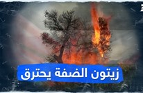 زيتون الضفة يحترق