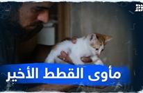 مأوى القطط الأخير