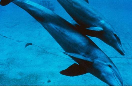 نفوق عدد قياسي من الدلافين على الساحل الأطلسي