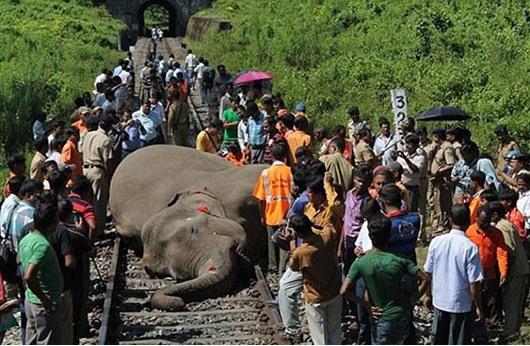 قطار يقتل سبعة فيلة في الهند