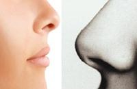 لماذا أنف الرجل أكبر منه عند المرأة؟