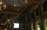العثور على آخر ديناصور عاش بأفريقيا في المغرب