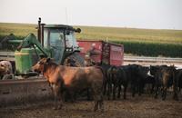 انتشار مزارع الحيوانات بهولندا يهدد بتفشي الأمراض