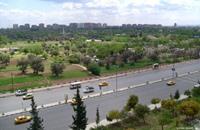 تهديدات لناشطين صوروا عمليات قطع أشجار الزيتون بدمشق