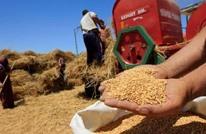 القمح المرفوض يثير خلافا بين مصر ورومانيا