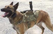 وكالة إيرانية: تنظيم الدولة فخخ مئات الكلاب السائبة