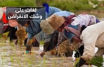 علماء ينجحون في زراعة أرز ينمو في ماء البحر