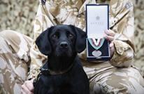 حفل لتكريم كلاب بريطانيا ومنحها وسام الحيوانات الأبطال