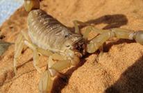 تحذير من ظاهرة مناخية خطيرة تؤدي إلى خروج الثعابين بمصر