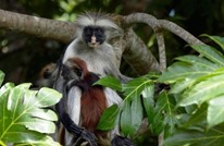 حيوانات عاشت على الأرض قبل انقراضها.. تعرف عليها (صور)