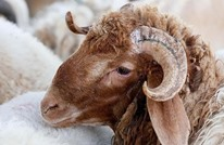 وزير سوداني: السعودية تسحب رخص استيراد الماشية