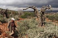 حملة اعتقالات وقطع لأشجار الزيتون بالضفة المحتلة