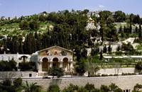 نخب فلسطينية: مخطط تهويدي جديد يستهدف جبل الزيتون