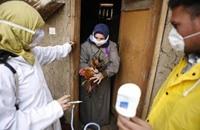 مصر تعلن أول وفاة بإنفلونزا الطيور في 2015