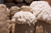 مصر ترفع الدعم عن محصول القطن