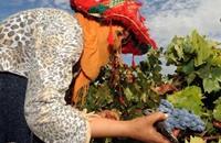 هل يستطيع المغرب التخفيف من سطوة الزراعة؟