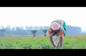 عندما تهبّ الزراعة لنجدة مشرّدي الحرب بالكونغو الديمقراطية