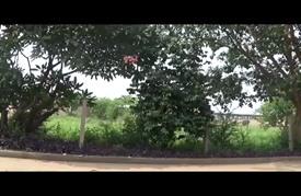 قطاع البنّ في بوروندي.. محصّن ضدّ الأزمات