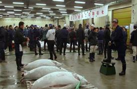 سمكة تونة تباع بسعر 117 ألف دولار في مزاد ياباني