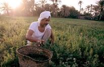 """مصر """"تفرم"""" 51 مليون مزارع بعد رفع أسعار الأسمدة"""