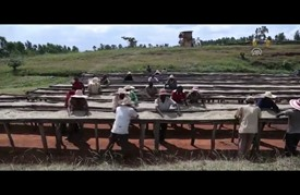 صناعة القهوة في إثيوبيا.. دولار مقابل يوم عمل لماركات عالمية