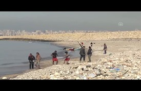 طيور النورس تشكل أزمة ضد سلامة الطيران في لبنان
