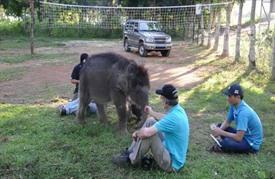 إنقاذ فصيل من الفيلة مهدد بالانقراض في فيتنام