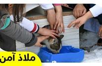 أطفال أتراك يطلقون مبادرة رائعة لحماية الحيوانات من برد الشتاء