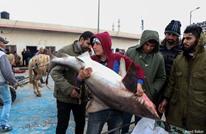 غزة.. عشرات أسماك القرش تقع في شباك الصيادين(صور)