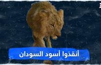 أنقذوا أسود السودان