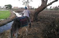 """""""تجاهل المزارع"""" يدفع نقابة الفلاحين بمصر لتجميد نشاطها"""