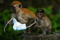 """تحذيرات من خطر """"الكمامات"""" على الحيوانات والنظم البيئية"""