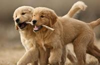 عجائب وطرائف الكلاب تتصدر أغرب تقارير العام