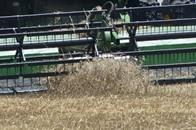 مسؤول ليبي: مخزون القمح نفد منذ مطلع العام الجاري