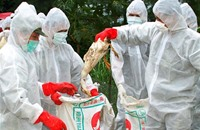 هونغ كونغ تعدم دجاجا وتعلق استيراد الدواجن