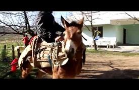 """أهالي قرية تركية يمتطون الخيل على طريقة """"جحا"""""""